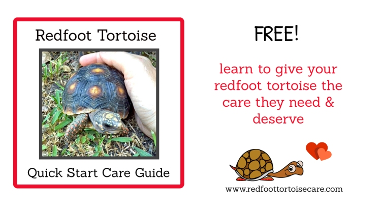 redfoot tortoise care guide